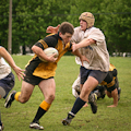 Kingston Panthers Rugby