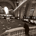 Grand Central Sheep
